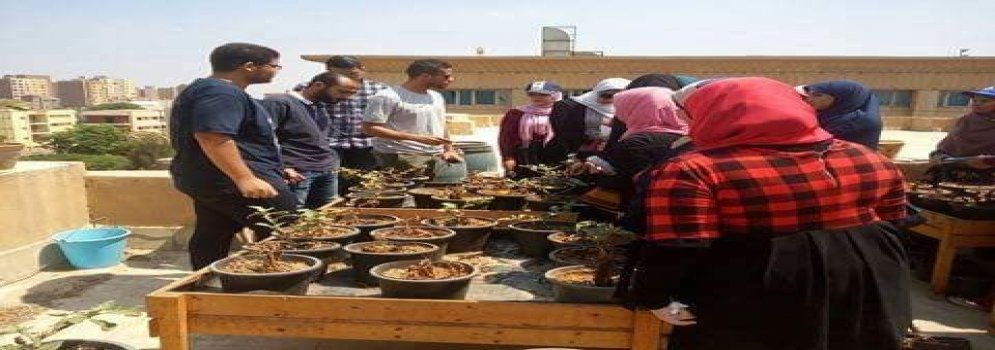 How to learn to cultivate roofs in Ain Shams University